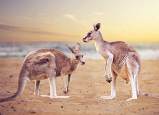 Down Under - Sprache und Job in Australien sind unbezahlbare Lehrmeister!
